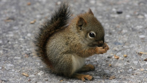 601210-cute-little-squirrel