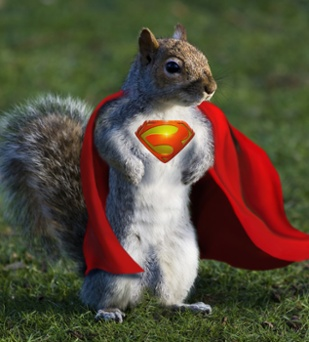super-dmn3-squirrel-sm-1